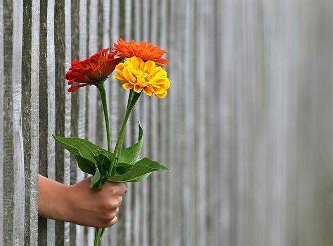 Image: hand through a gate holding yellow, orange, and red carnation flowers.